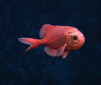 Marine Biology essay writing websites
